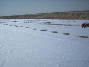 复合土工膜 两布一膜 一布一膜 景观湖防渗膜 人工湖防渗膜