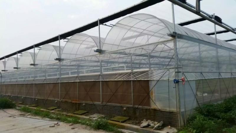 厂家直销连栋薄膜温室大棚 蔬菜大棚