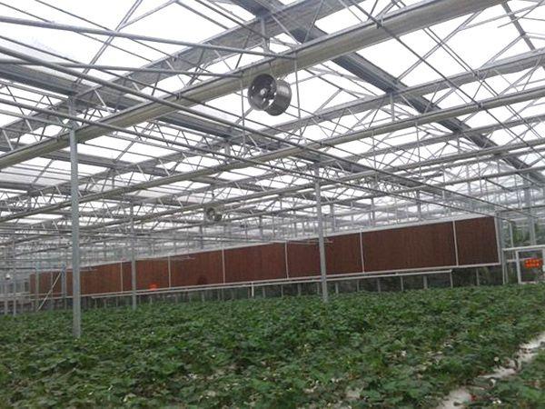 厂家直销温室大棚文洛式圆形拱棚 阳光板大棚
