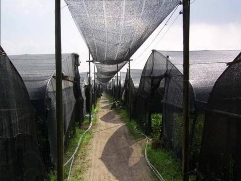 黑色遮阳网A赛金黑色遮阳网A黑色遮阳网生产厂家