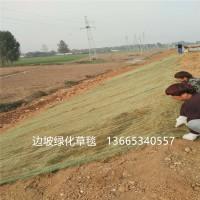 植生毯厂家货源 护坡环保草毯 植物纤维毯 批发价格